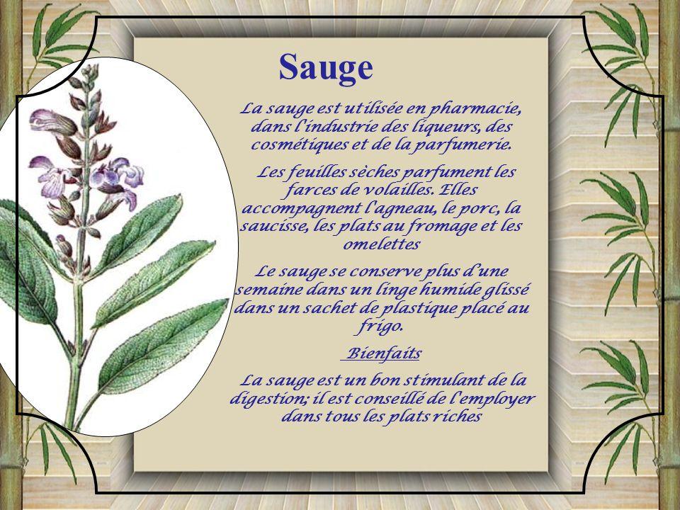 Sauge La sauge est utilisée en pharmacie, dans l industrie des liqueurs, des cosmétiques et de la parfumerie.