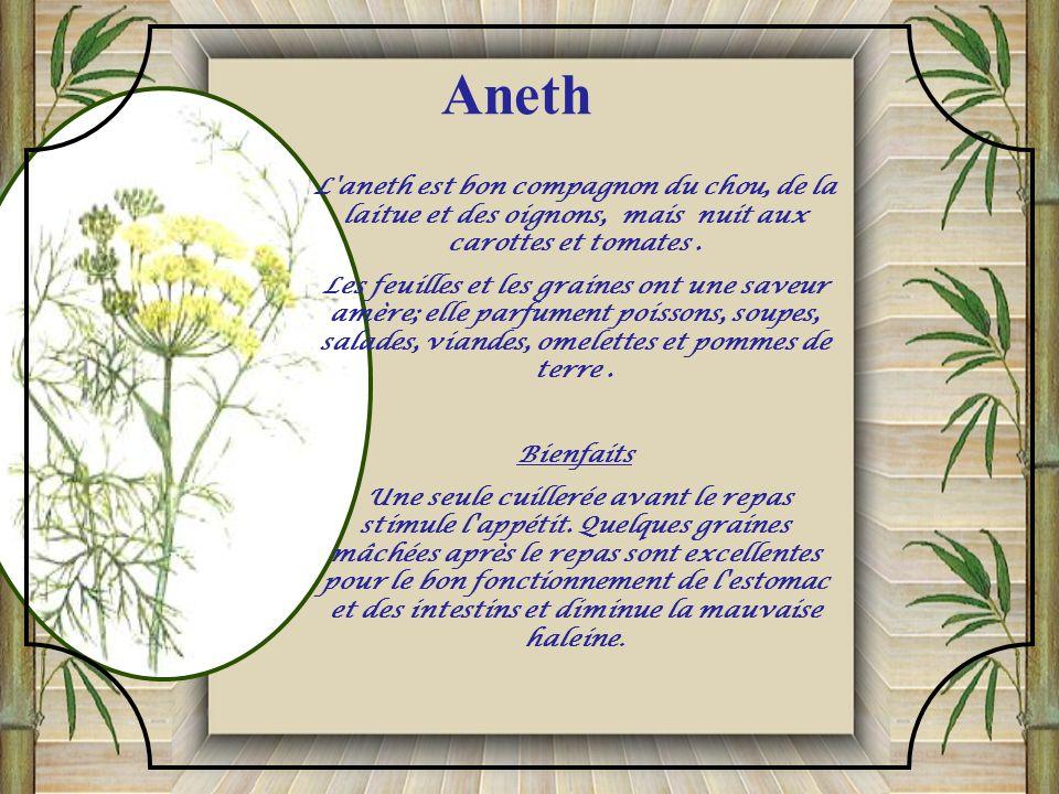 Aneth L aneth est bon compagnon du chou, de la laitue et des oignons, mais nuit aux carottes et tomates .