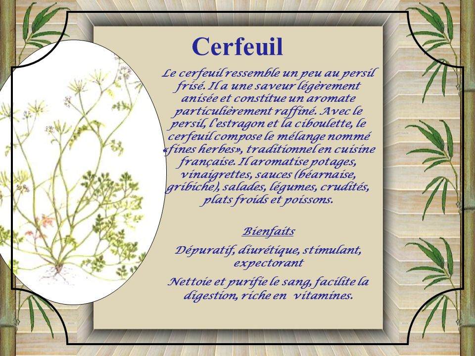 Cerfeuil