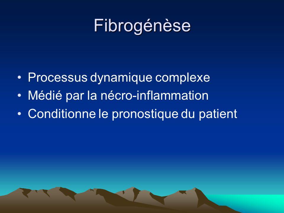 Fibrogénèse Processus dynamique complexe