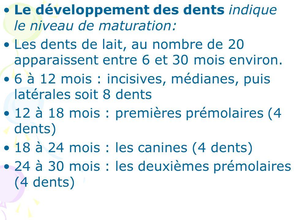 Le développement des dents indique le niveau de maturation: