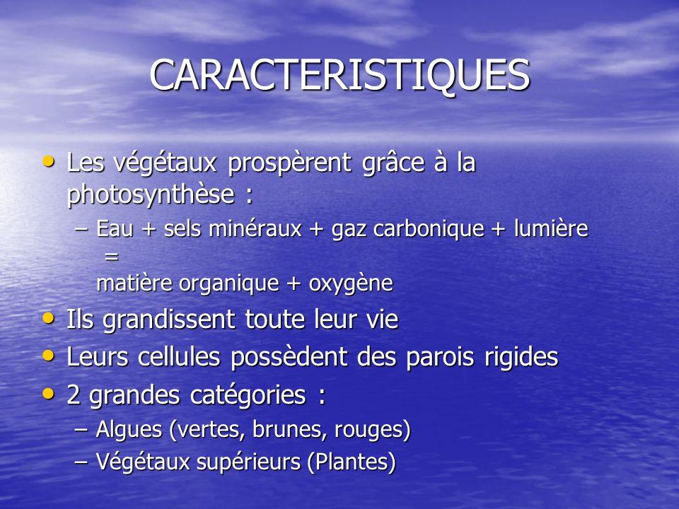 CARACTERISTIQUES Les végétaux prospèrent grâce à la photosynthèse :