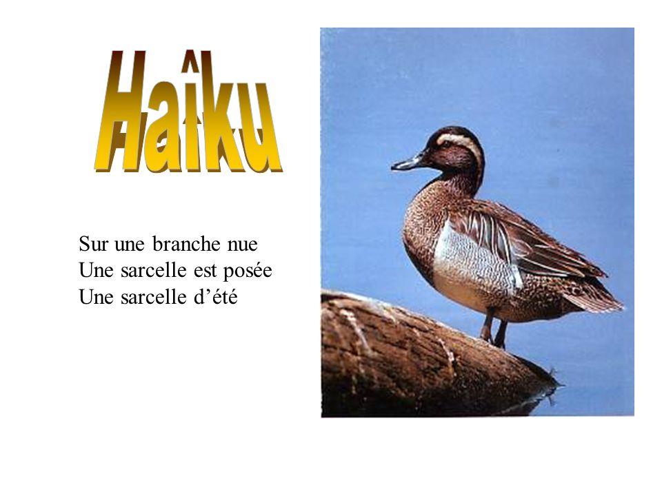 Haîku Sur une branche nue Une sarcelle est posée Une sarcelle d'été