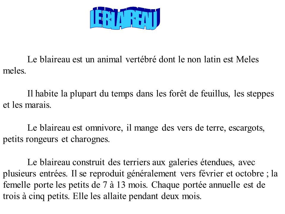 LE BLAIREAU Le blaireau est un animal vertébré dont le non latin est Meles meles.