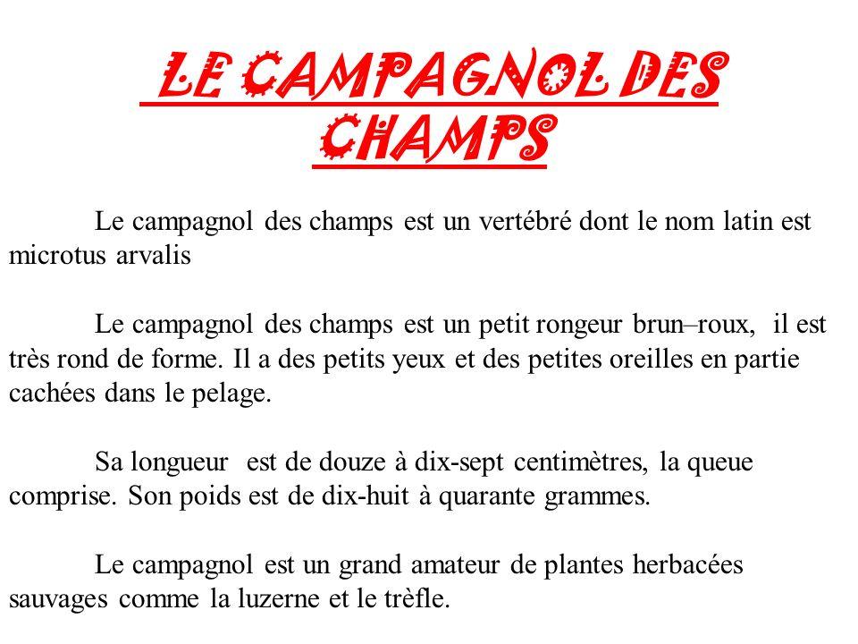 LE CAMPAGNOL DES CHAMPS