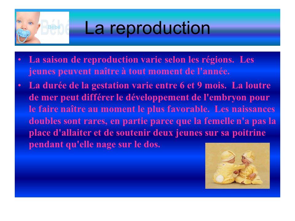 La reproduction La saison de reproduction varie selon les régions. Les jeunes peuvent naître à tout moment de l année.