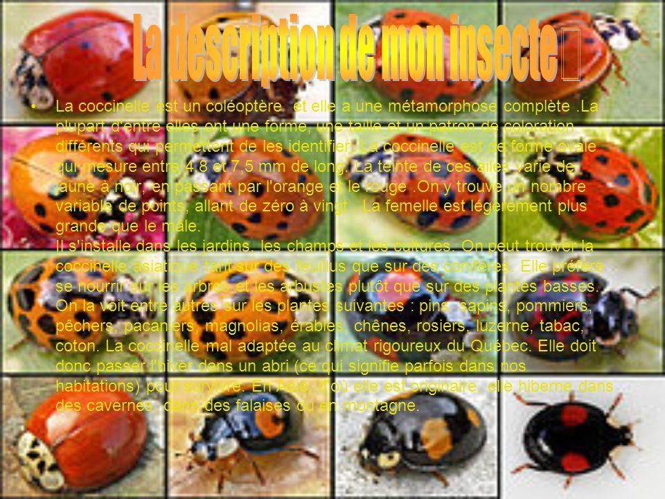 La description de mon insecte