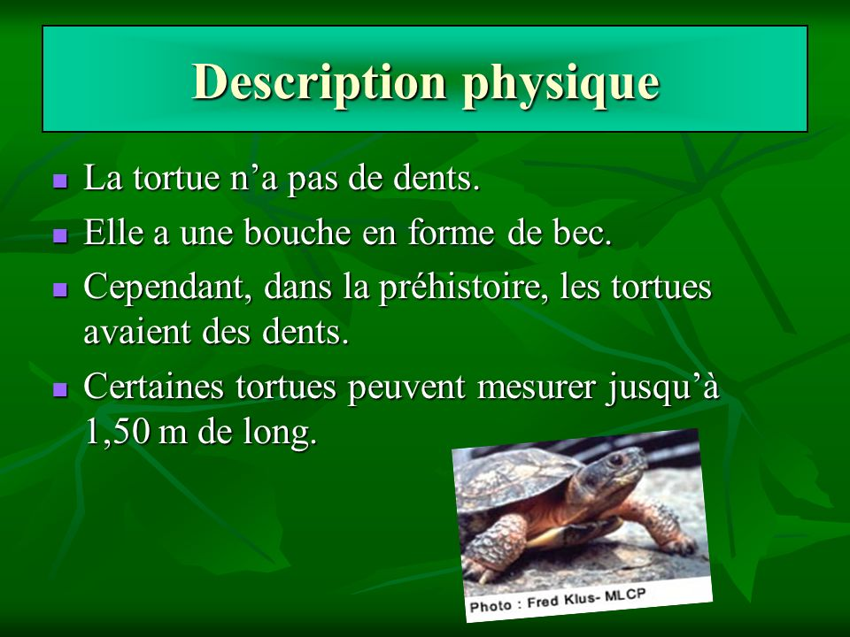 Description physique La tortue n'a pas de dents.