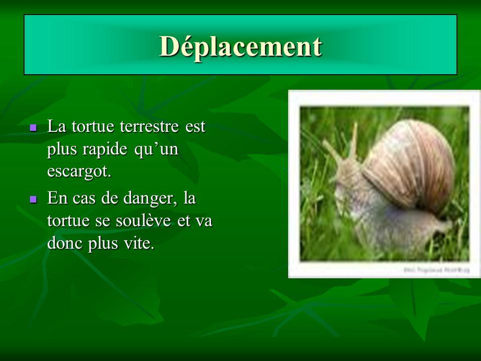 Déplacement La tortue terrestre est plus rapide qu'un escargot.