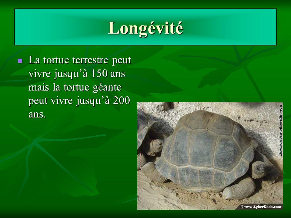 Longévité La tortue terrestre peut vivre jusqu'à 150 ans mais la tortue géante peut vivre jusqu'à 200 ans.