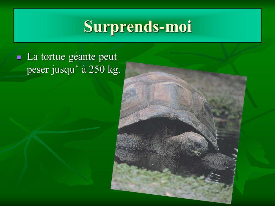 Surprends-moi La tortue géante peut peser jusqu' à 250 kg.