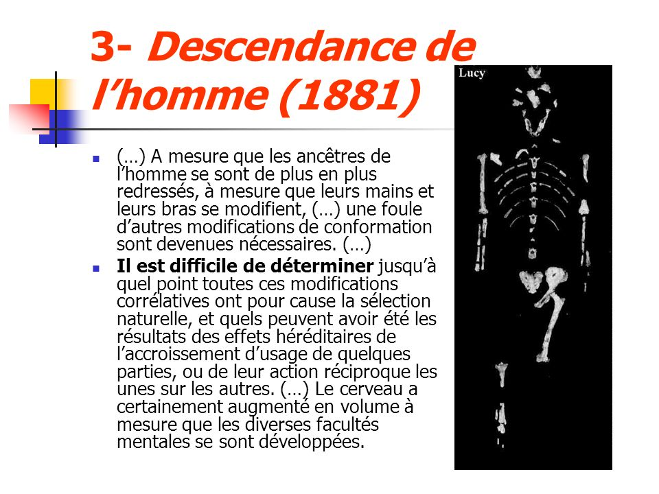 3- Descendance de l'homme (1881)