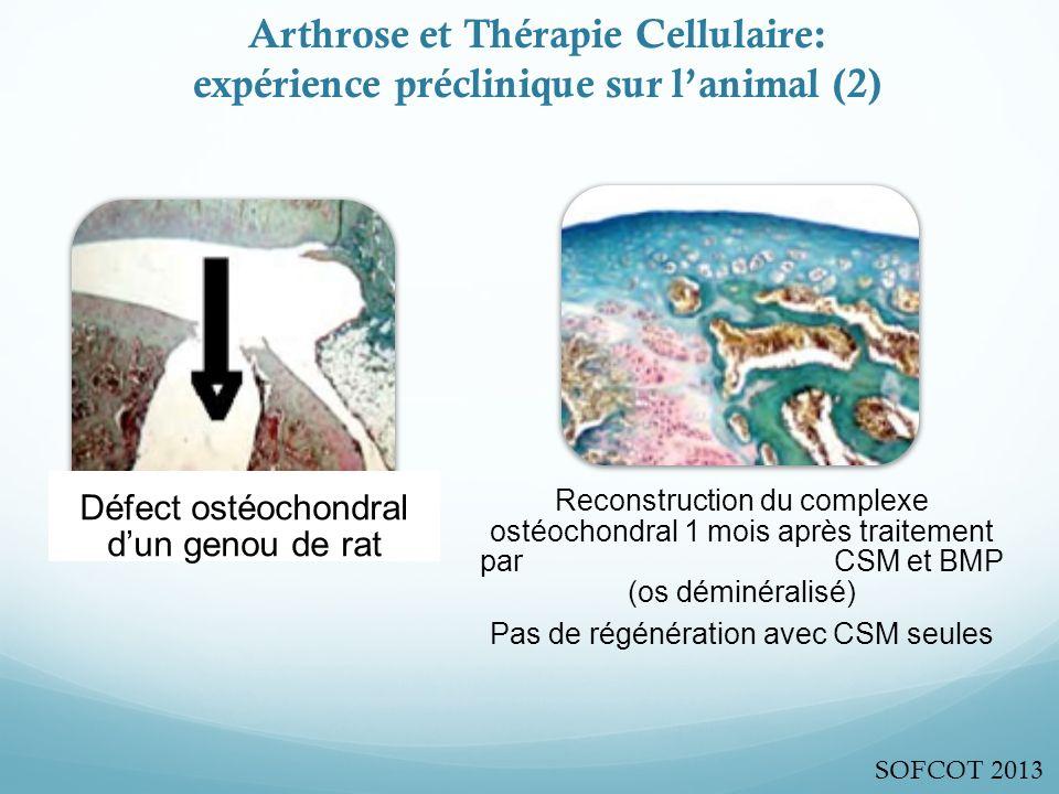 Arthrose et Thérapie Cellulaire: expérience préclinique sur l'animal (2)