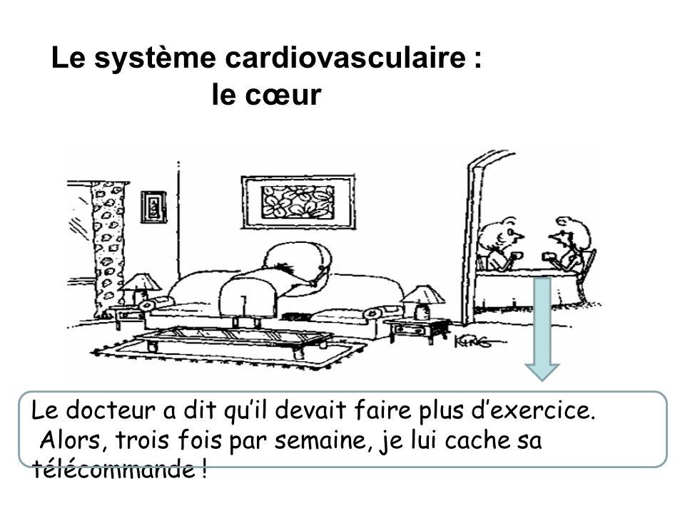Le système cardiovasculaire : le cœur