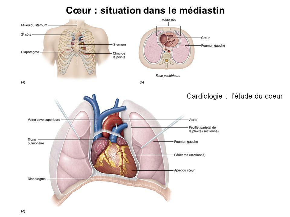 Cœur : situation dans le médiastin