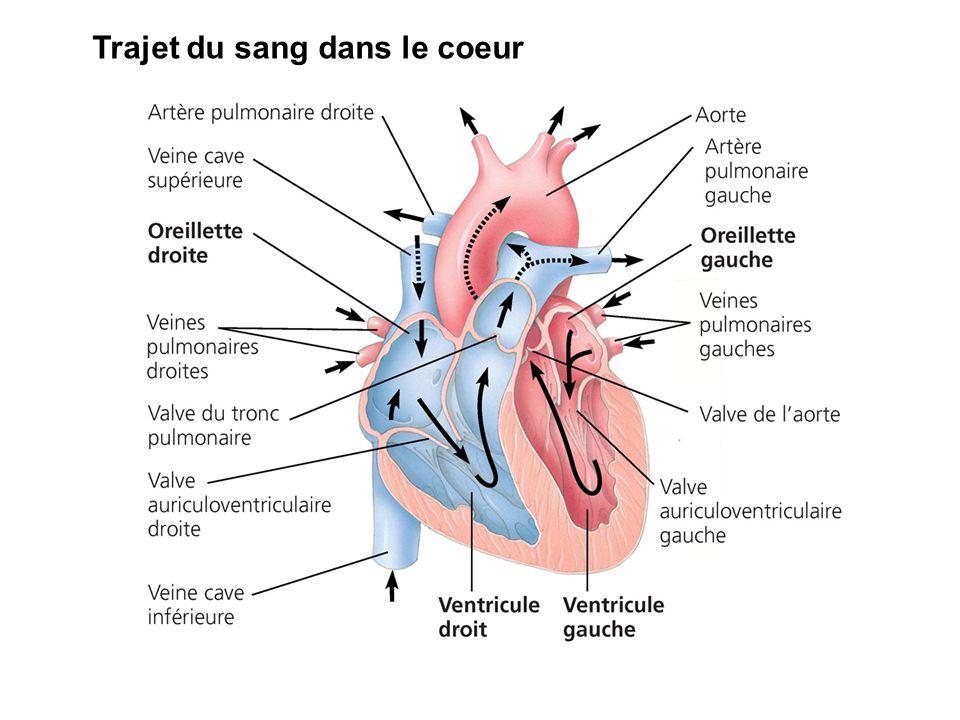 Trajet du sang dans le coeur