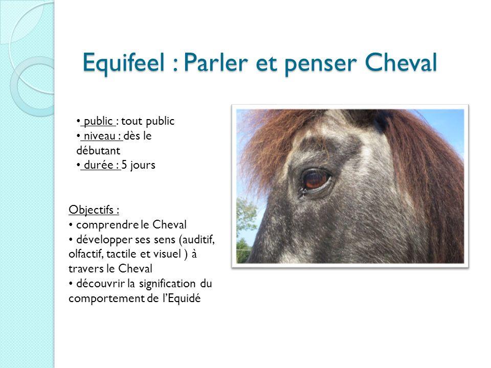 Equifeel : Parler et penser Cheval