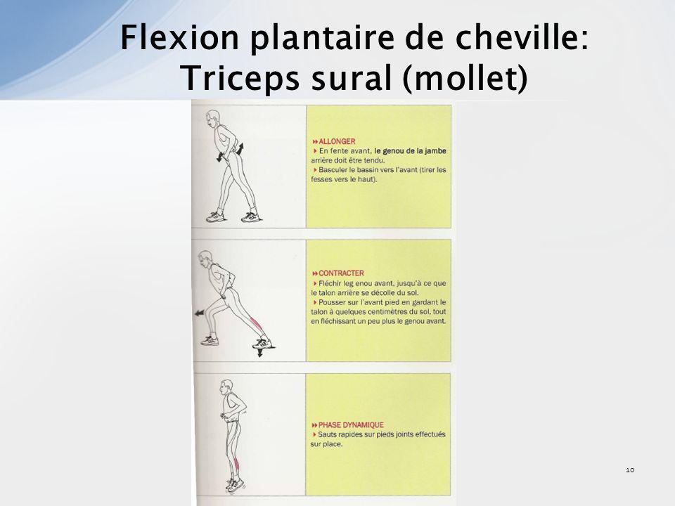 Flexion plantaire de cheville: Triceps sural (mollet)