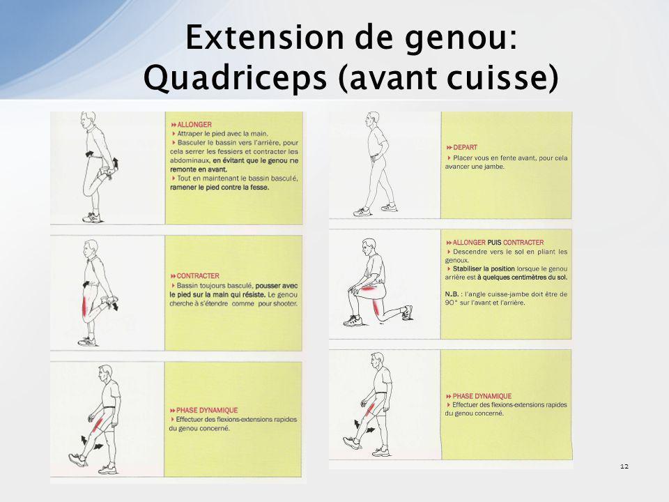 Quadriceps (avant cuisse)
