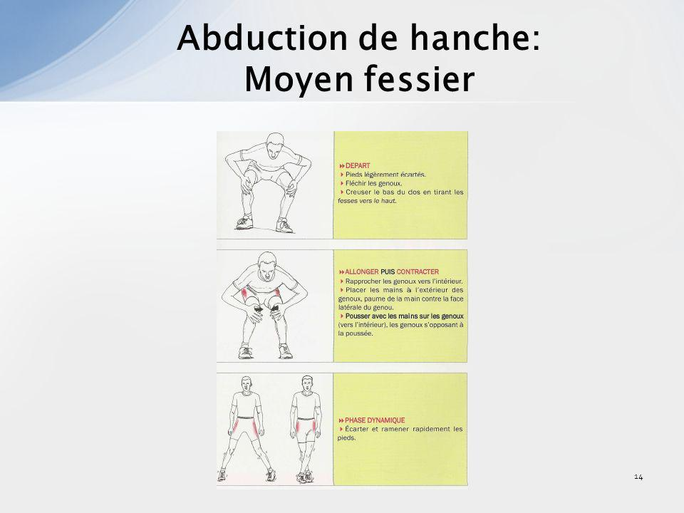 Abduction de hanche: Moyen fessier