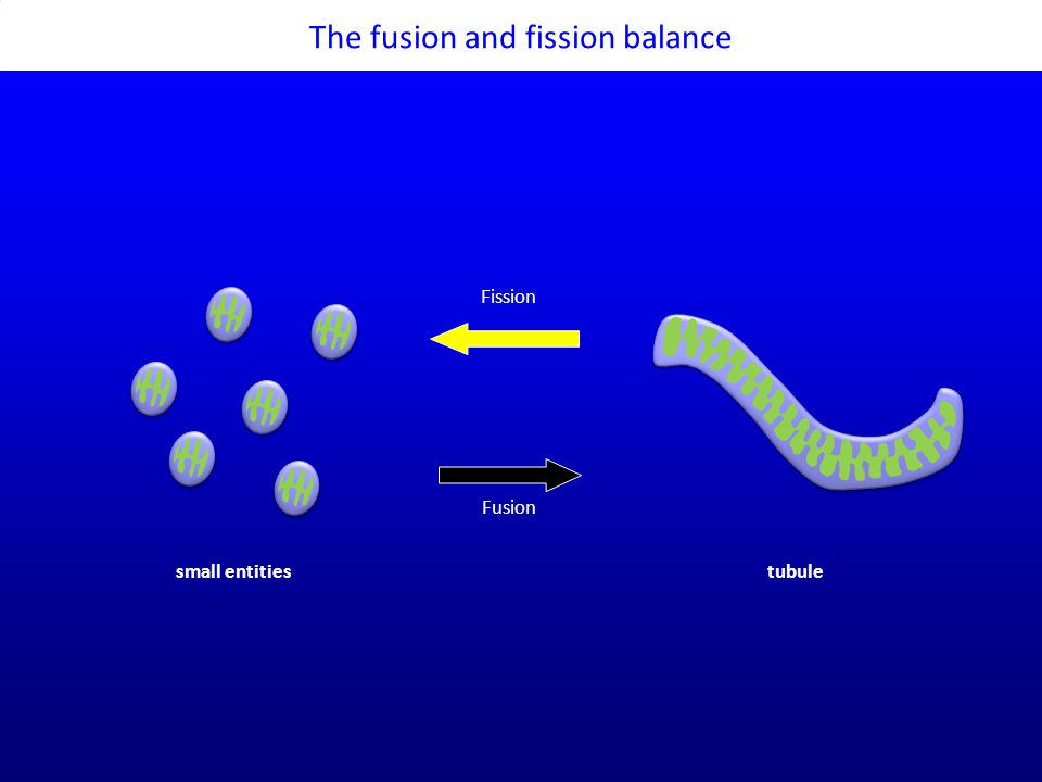 The fusion and fission balance