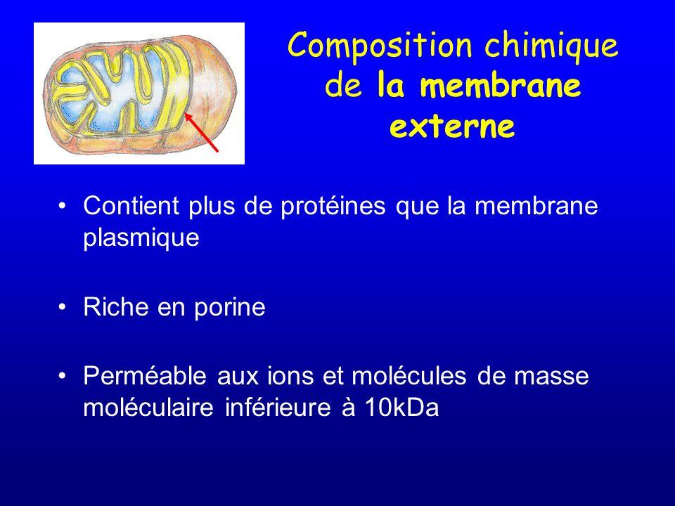 Composition chimique de la membrane externe