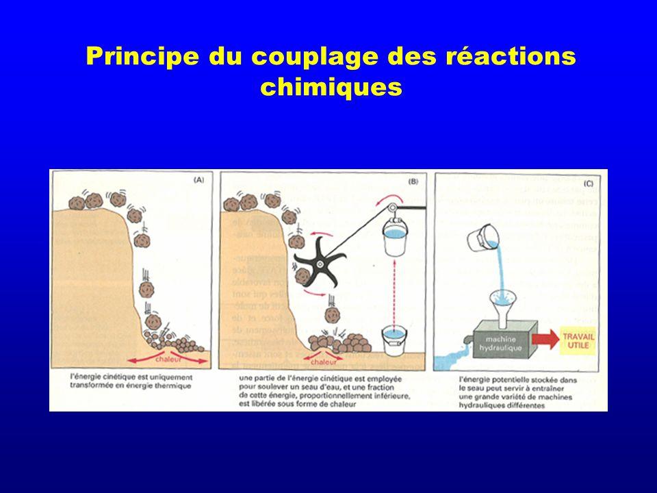 Principe du couplage des réactions chimiques
