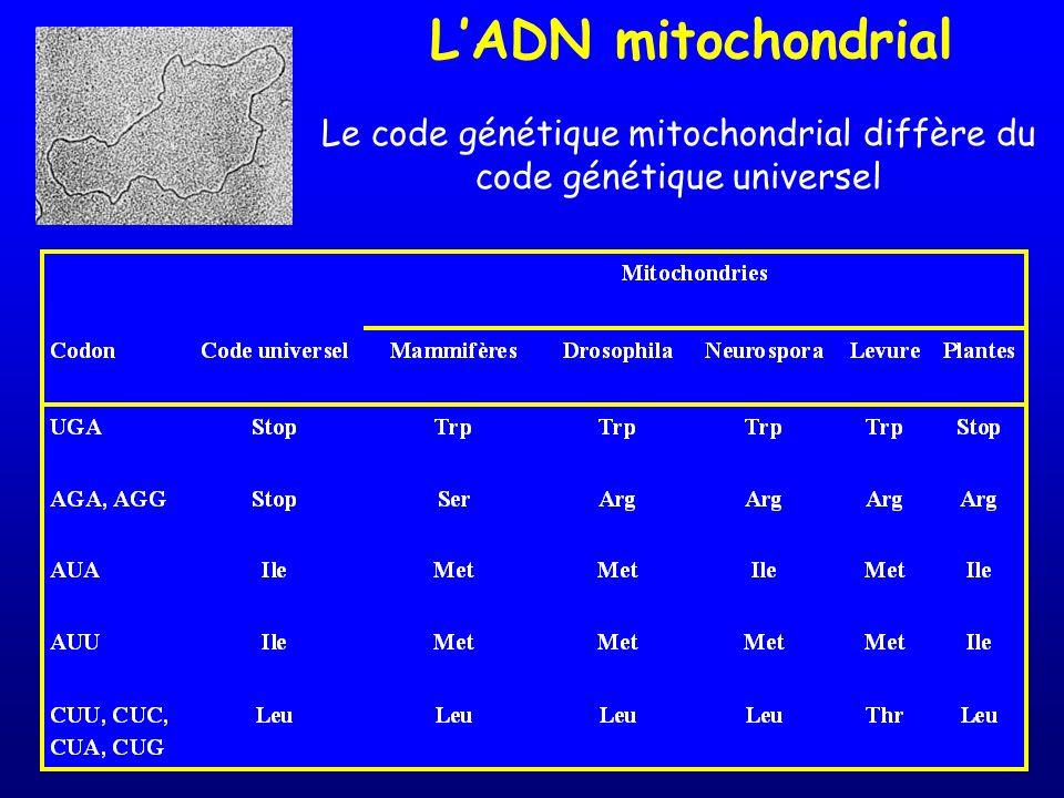 Le code génétique mitochondrial diffère du code génétique universel