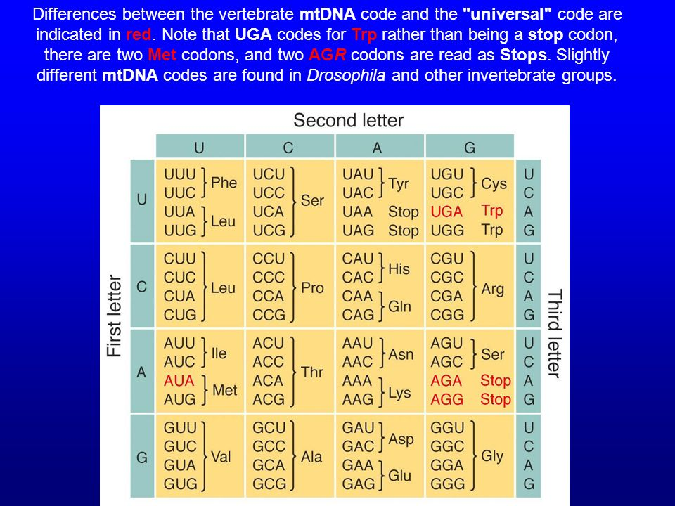 Differences between the vertebrate mtDNA code and the universal code are indicated in red.