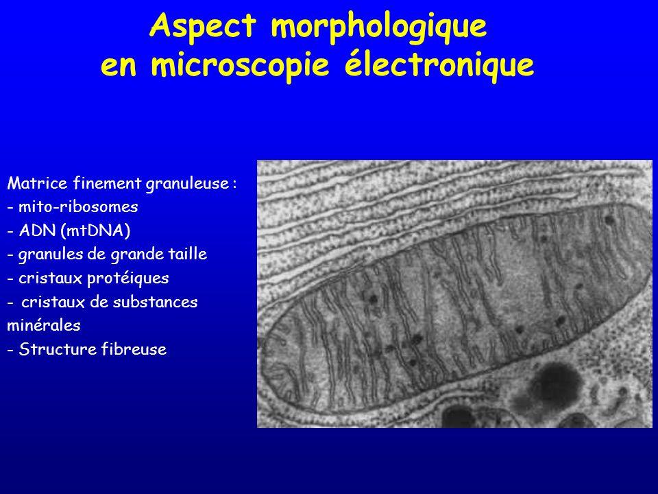 Aspect morphologique en microscopie électronique