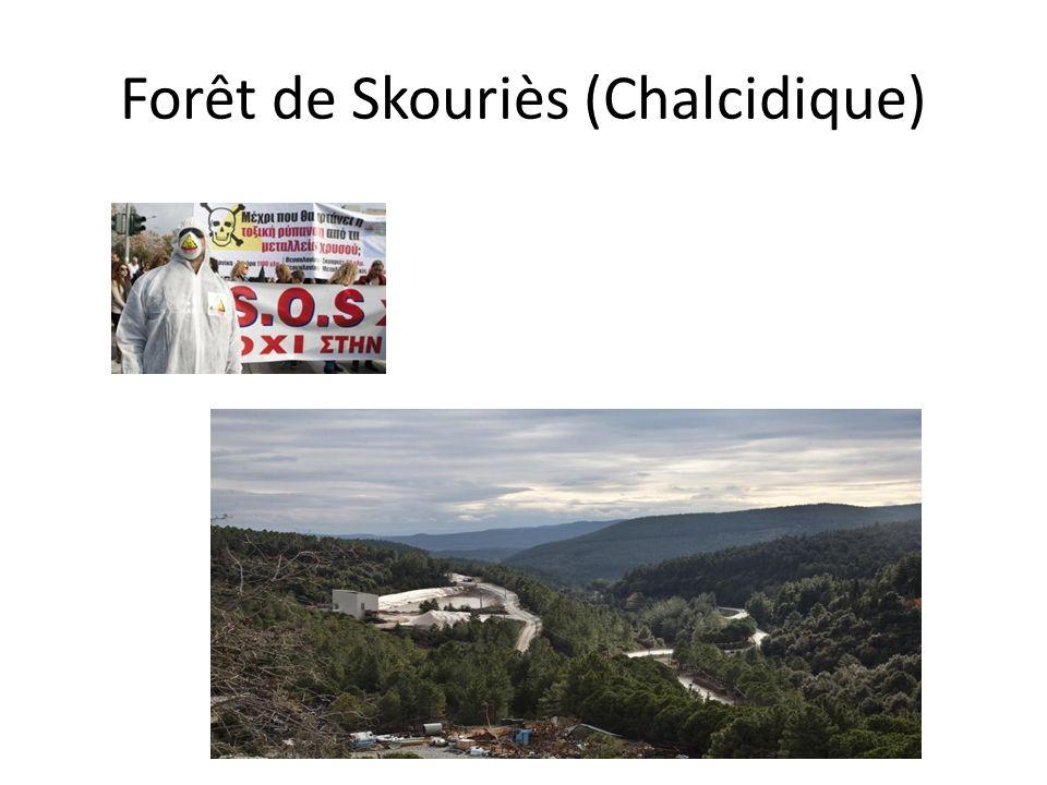 Forêt de Skouriès (Chalcidique)
