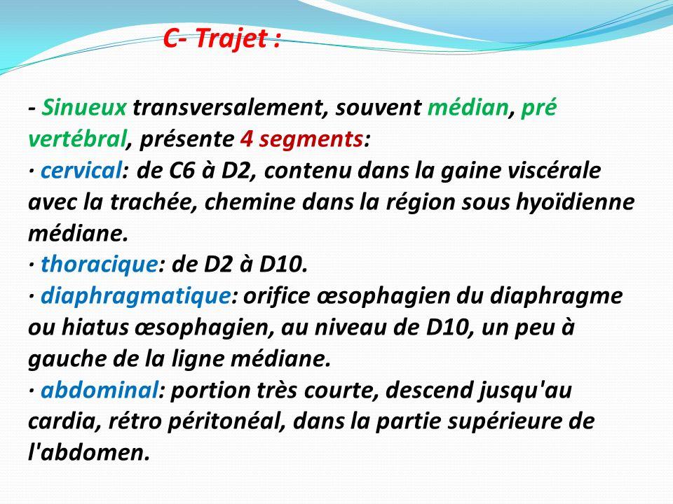 C- Trajet : - Sinueux transversalement, souvent médian, pré vertébral, présente 4 segments:
