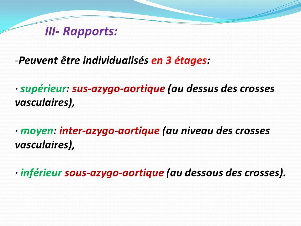 III- Rapports: Peuvent être individualisés en 3 étages: · supérieur: sus-azygo-aortique (au dessus des crosses vasculaires),