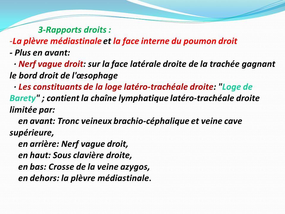 3-Rapports droits : La plèvre médiastinale et la face interne du poumon droit. - Plus en avant: