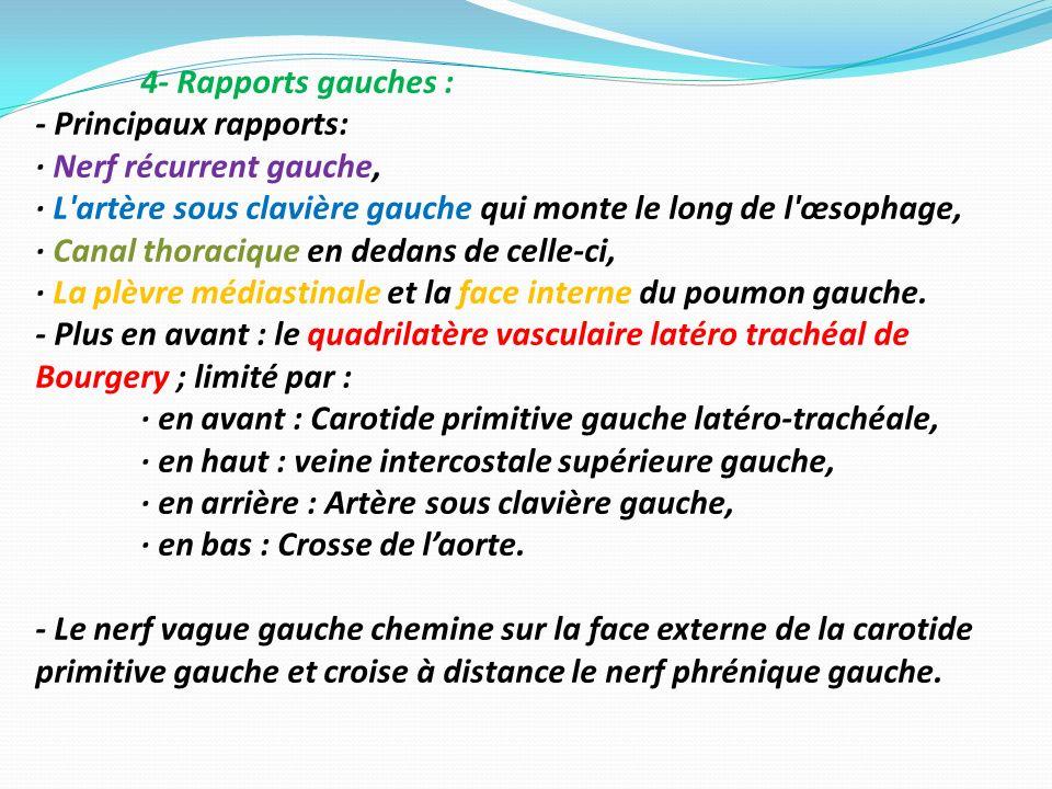 4- Rapports gauches : - Principaux rapports: · Nerf récurrent gauche, · L artère sous clavière gauche qui monte le long de l œsophage,
