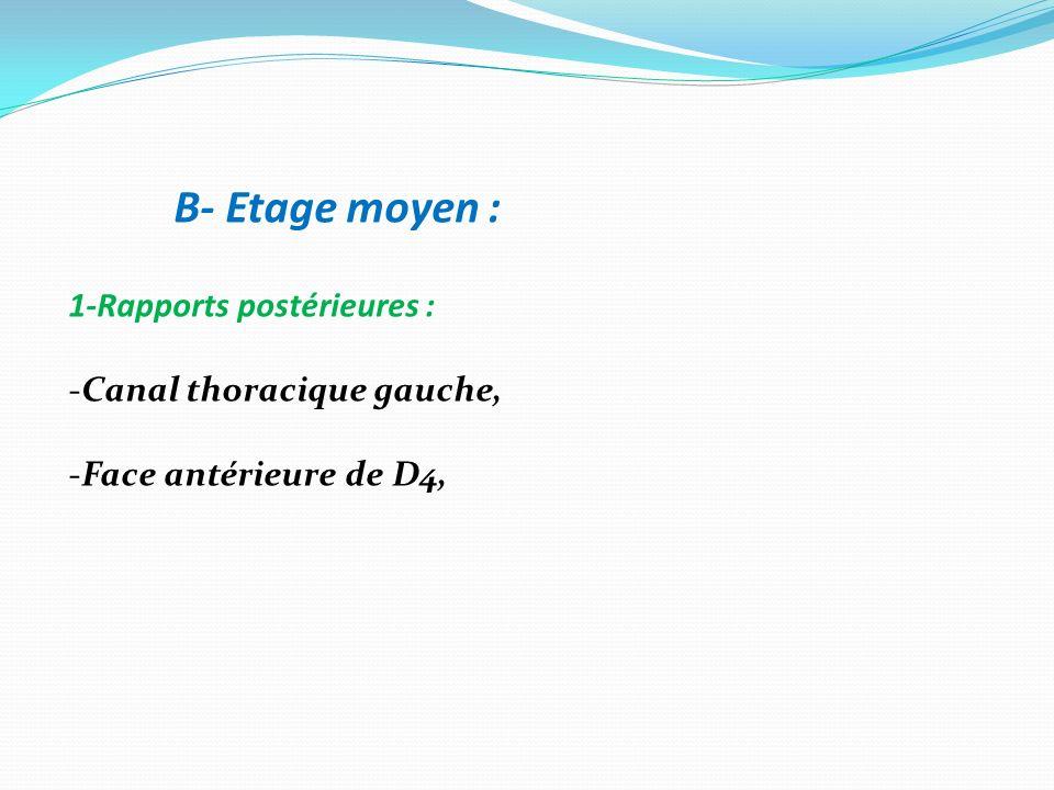 B- Etage moyen : 1-Rapports postérieures : Canal thoracique gauche,