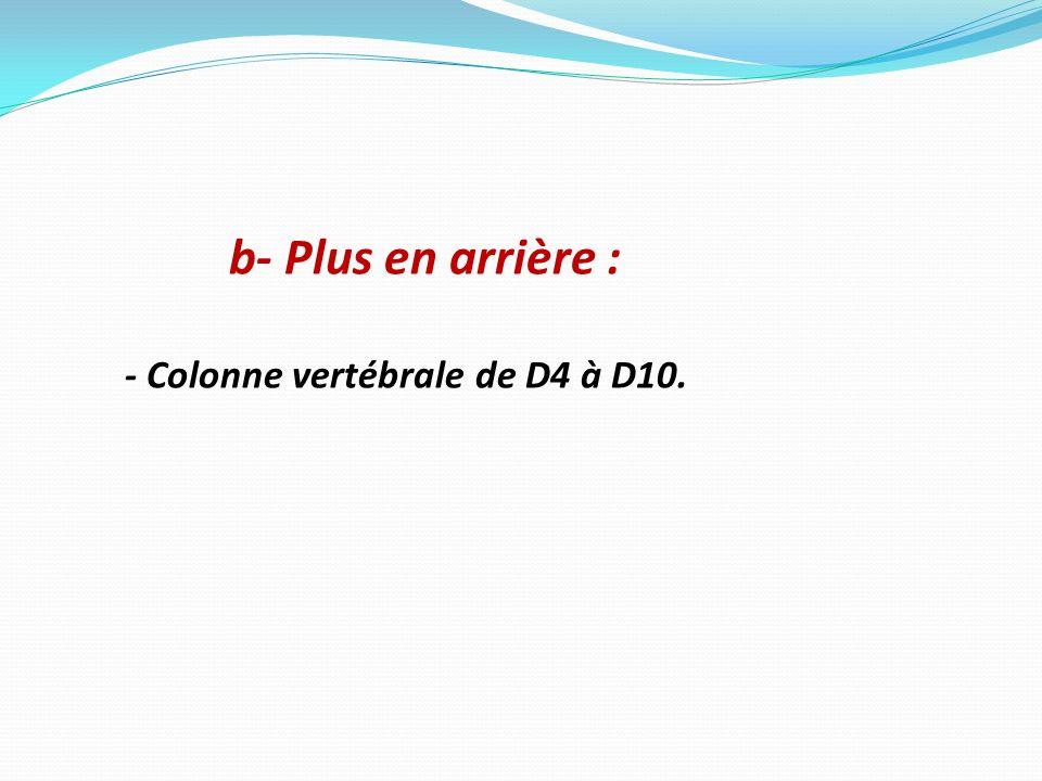 b- Plus en arrière : - Colonne vertébrale de D4 à D10.