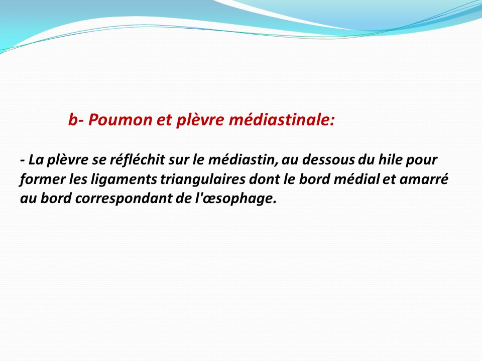 b- Poumon et plèvre médiastinale: