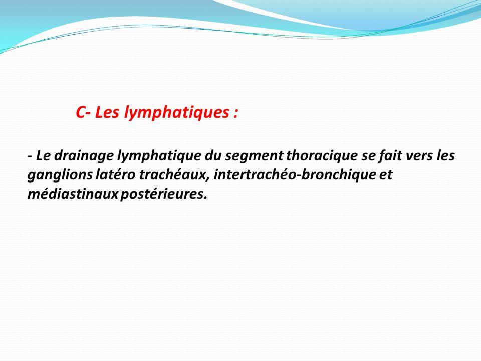 C- Les lymphatiques :