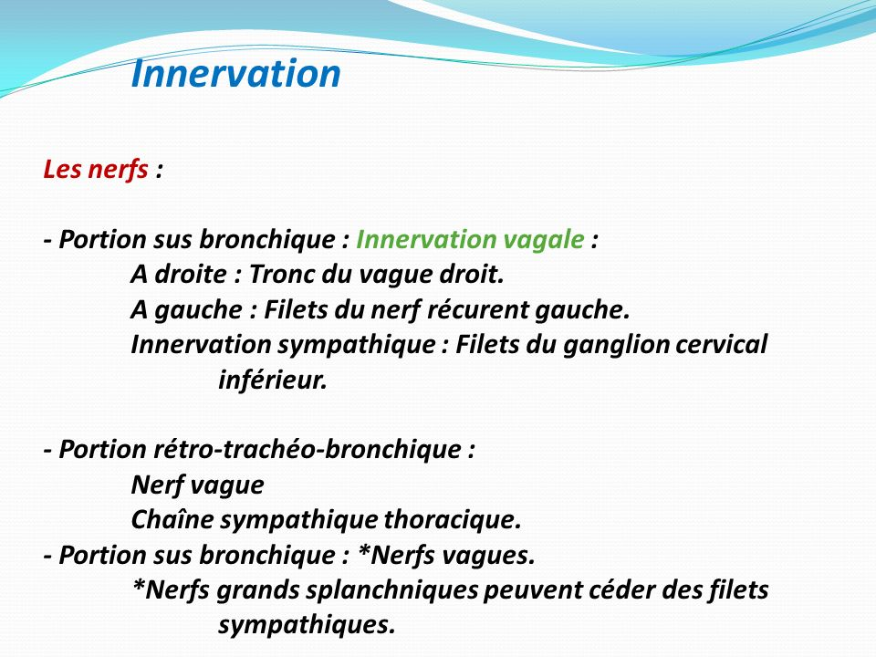 Innervation Les nerfs :
