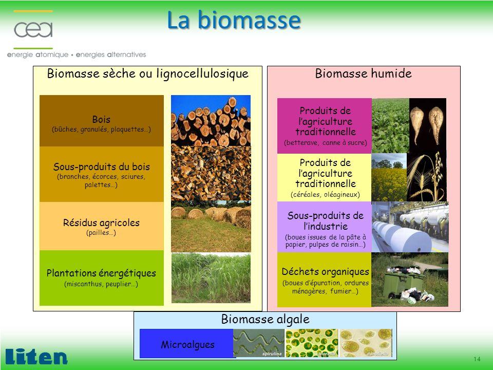 La biomasse Biomasse sèche ou lignocellulosique Biomasse humide