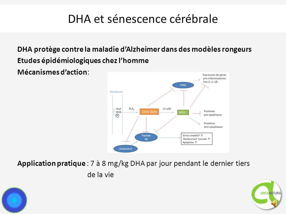 DHA et sénescence cérébrale