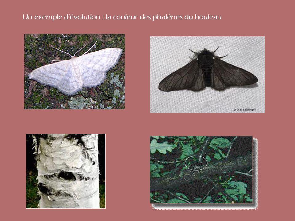 Un exemple d'évolution : la couleur des phalènes du bouleau
