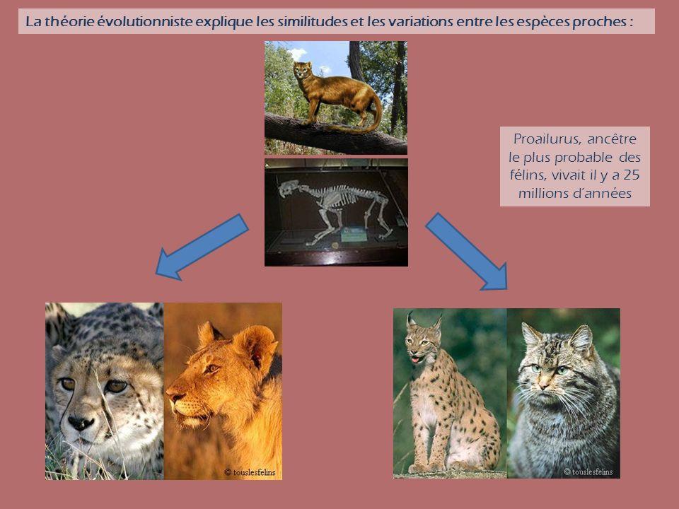 La théorie évolutionniste explique les similitudes et les variations entre les espèces proches :