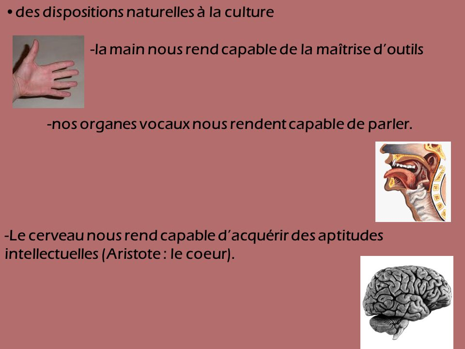 •des dispositions naturelles à la culture