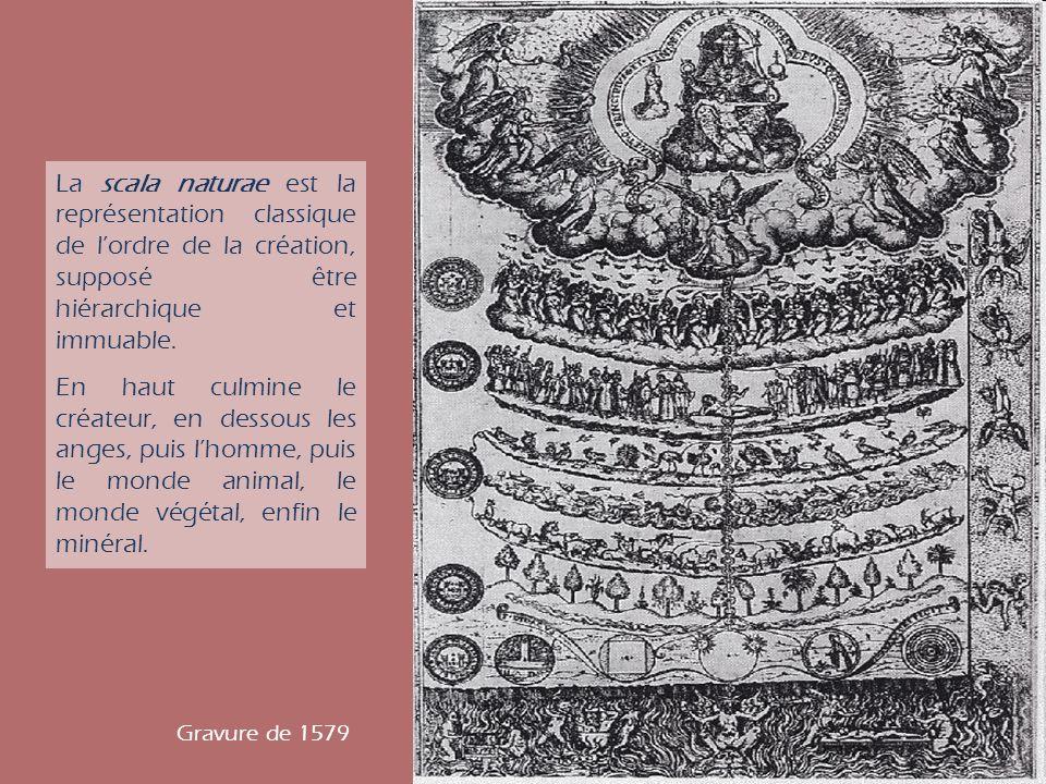La scala naturae est la représentation classique de l'ordre de la création, supposé être hiérarchique et immuable.
