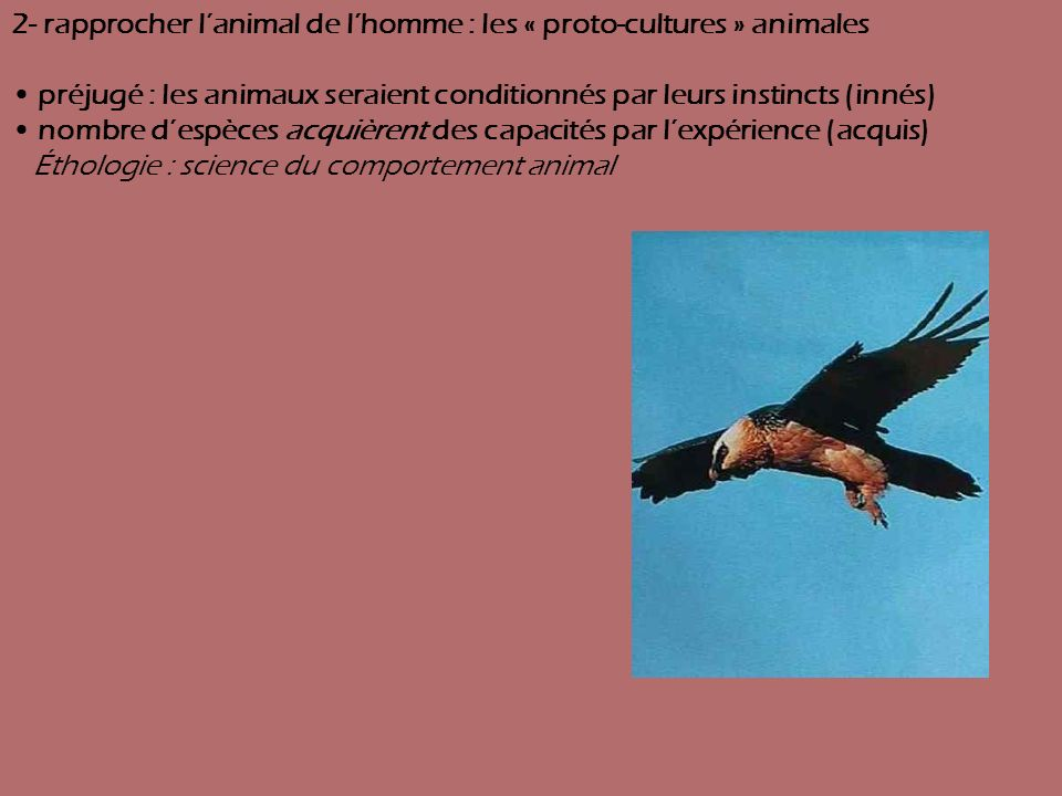 2- rapprocher l'animal de l'homme : les « proto-cultures » animales
