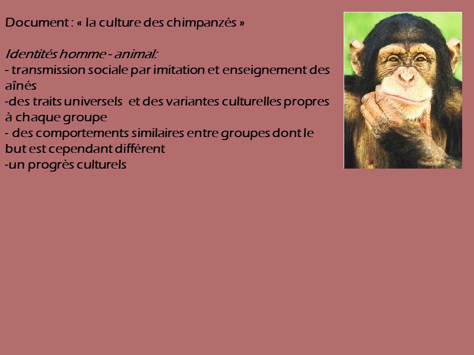Document : « la culture des chimpanzés » Identités homme - animal: