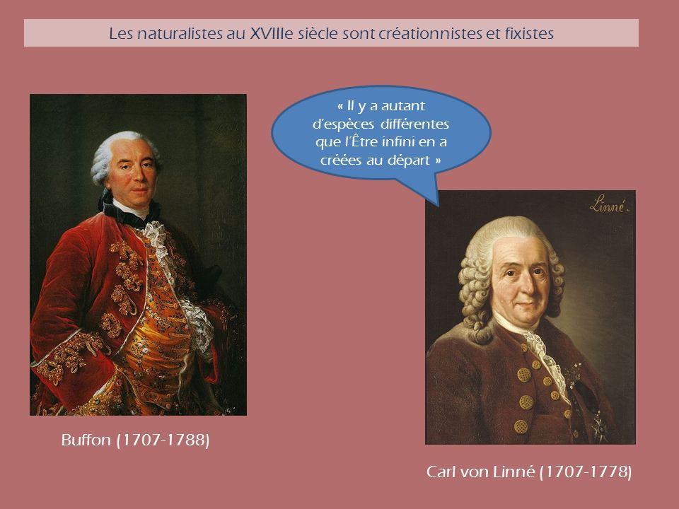 Les naturalistes au XVIIIe siècle sont créationnistes et fixistes