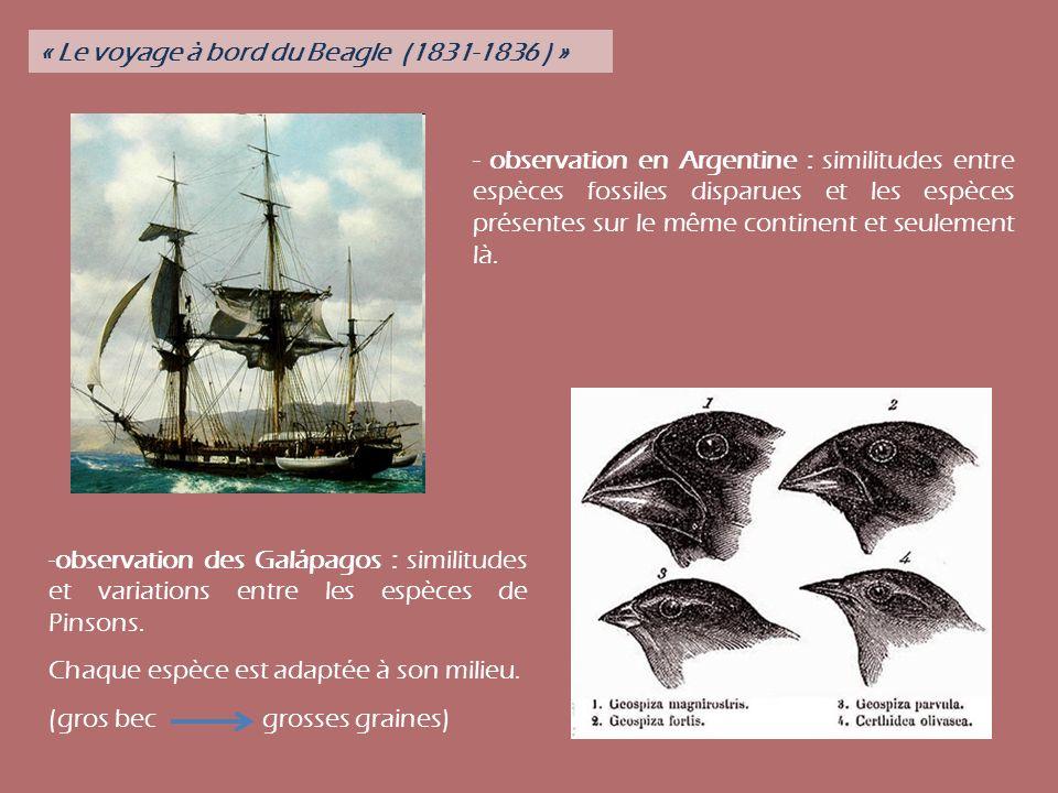 « Le voyage à bord du Beagle (1831-1836 ) »
